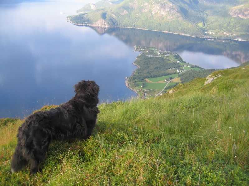 Utsikt mot Ortneset fra Søtekollen