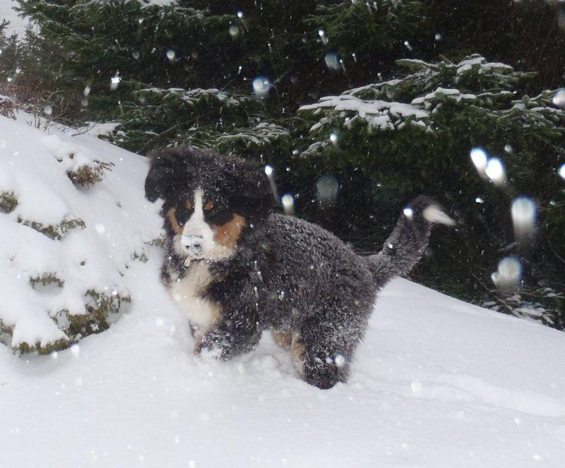 Snø er gøy!